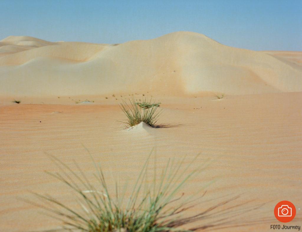 Show me the way, Liwa Desert shot on Ektar 100 with a Mamiya 645
